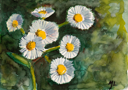 Fleabane (MIchael Liebhaber, watercolor, 2014)