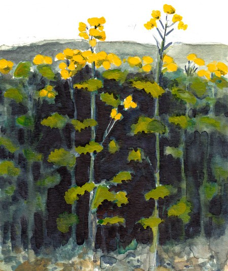 "Rapeseed Plant (Michael Liebhaber, 2014, watercolor, 4x6"")"