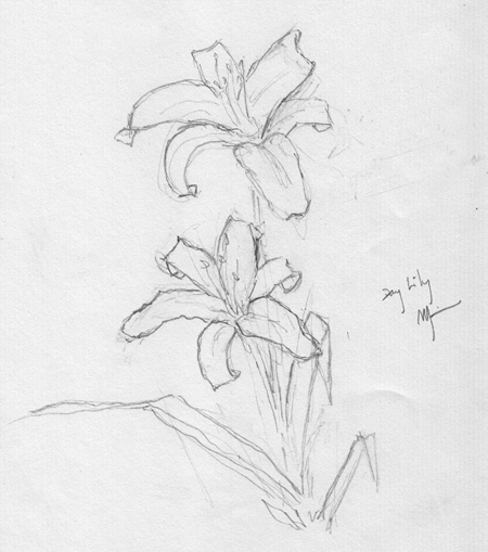 Michael Liebhaber, Day Lily, pencil on paper,  7.5 x 9 in. (19 x 22.5 cm)